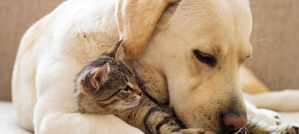 Landlords more likely to rent to pet owners than tenants on housing benefits